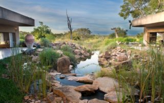 Sabi-Sabi-Earth-Lodge-Water-Feature.