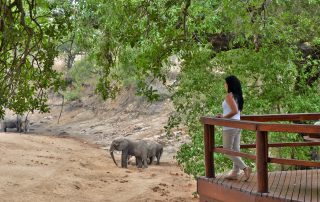 Hamiltons-Tented-Camp-Viewing-Elephants-From-Deck