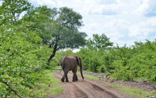Chundu-Island-Wildlife-Elephant-scaled