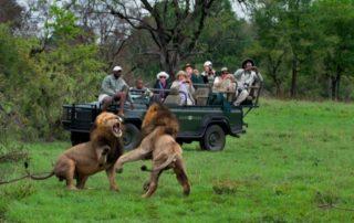 Sabi-Sabi-Selati-Safari.