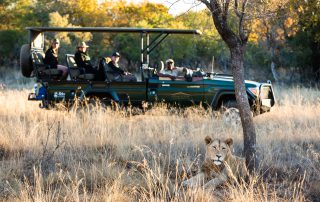 Safari-Plains-Safari-Experience