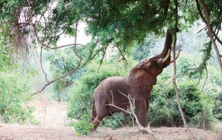 The-Outpost-Wildlife-Elephan