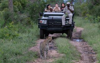 Sabi-Sabi-Little-Bush-Wildlife-Safari-Leopard