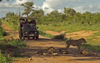 Mjejane-River-Lodge-Safari