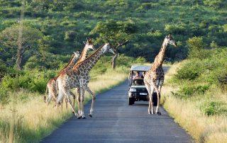 Rhino-Ridge-Safari-Wildlife-game-drive-Safari