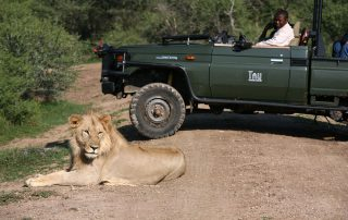 Tau-Game-Vehicle-and-Lion