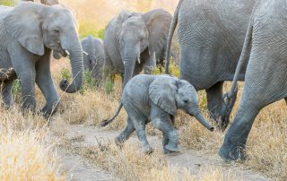 Tintswalo-Safari-Wildlife-Elephants