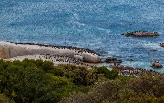 Tintswalo-Boulders-View-Boulders-Penguin-Beach