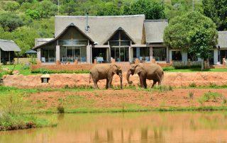 Askari-main-lodge-with-Elephants