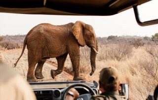 Lush-Game-drive - Safari - Elephant
