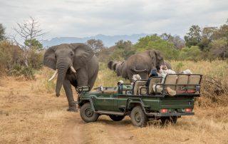 karongwe-Becks-Safari-game-drive-elephant-
