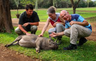 Amakhosi-Safari-Interaction-with-Tula-the-Warthog
