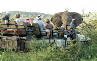 Amakhosi-Game-drive-Elephant