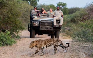 Kapama Southern Camp - Game drive - leopard