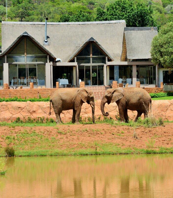 Askari-view-of-lodge-elephants