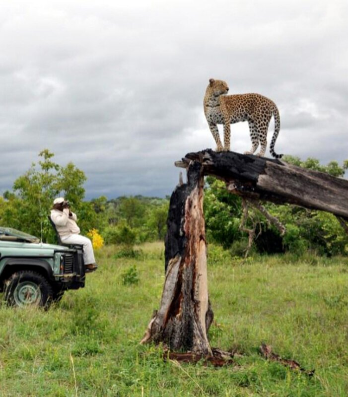 Idube-Leopard-on-tree-with-vehicle