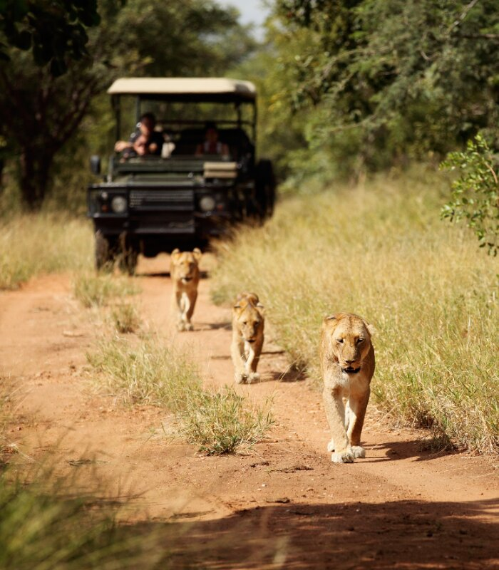 Jabulani-game-drive-safari-Lion-pride