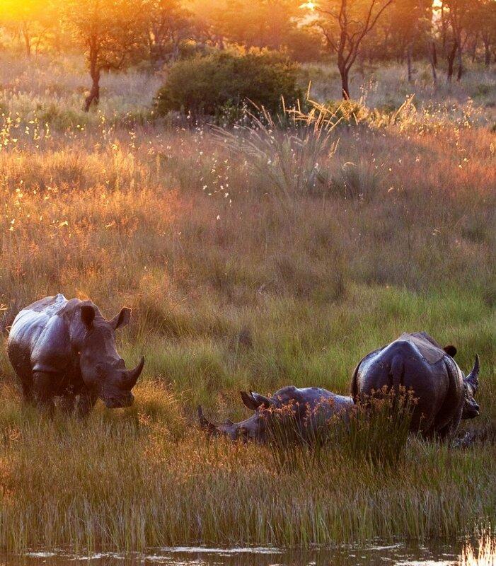 Nungubane-Rhinos-boma-dam