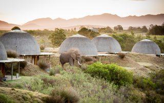 Gondwana-Kwena-Lodge-Ellies