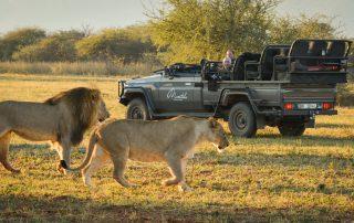 Marataba-South-africa-safari-game-drive-lion