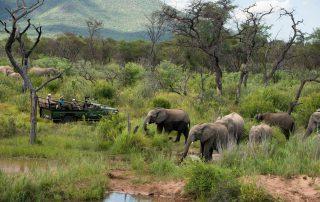 Marataba-South-Africa_Safari_4_-Game-Drive