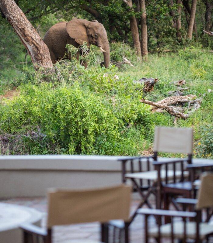 Amani-Simbavati-Fire-pit-elephant-sighting