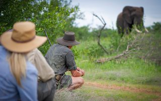 Klaserie-Sands-bush-walk-elephant-sighting
