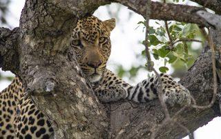 Simbavati-Safari-Lodges-Wildlife