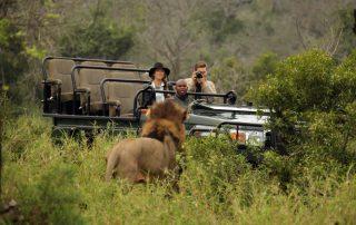 Thanda-Game-Reserve-Wildlife-Lion-Safari-game-drive