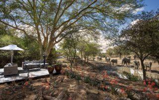 Guest-Area-at-andBeyond-Ngala-Safari