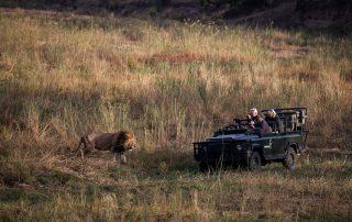 Mala-Mala-Wildlife-Game-Drive-Lion