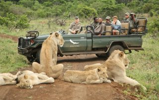 Lion-sighting-on-a-safari-game-drive-at-andBeyond-Phinda-Private-Game-Reserve