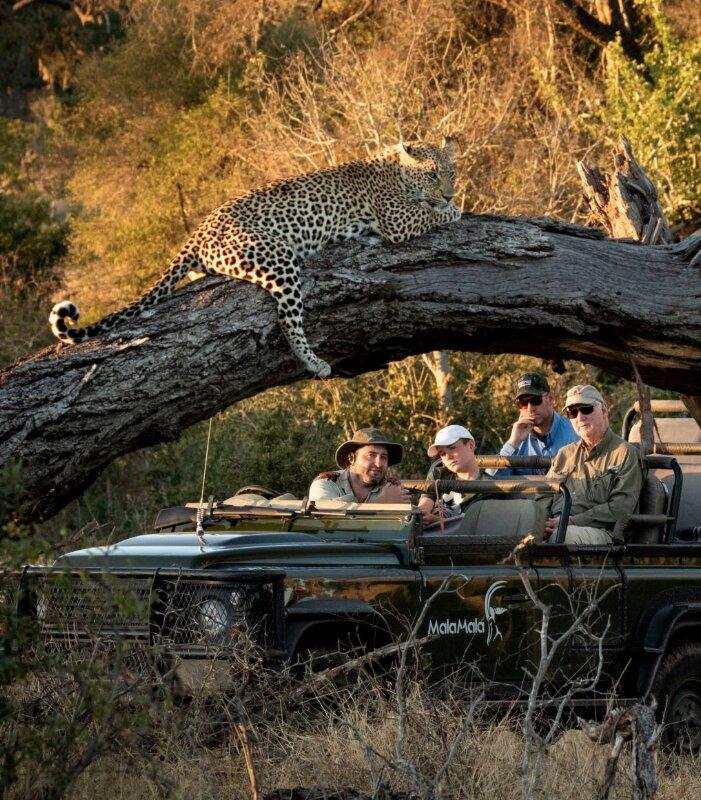 Mala-Mala-Game-Drive-Leopard