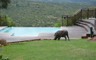 Umzolozolo-Xscape4u-Warthog-by-pool-Nambiiti-Game-Reserve