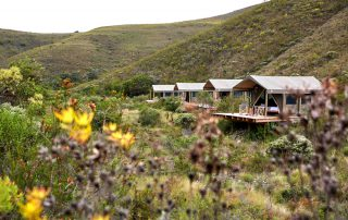 Tented-Eco-Camp-Xscape4u-Exterior-Tents-Gondwana-Game-reserv