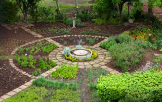 Olivers-Herb-and-Vegetable-Garden