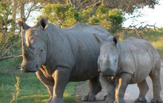 Lentaba-Lodge-Xscape4u-Wildlife-Lalibela-Game-Reserve.