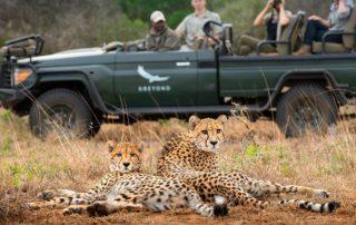Safari-vehicle-Cheetah-at-phinda-Xscape4u