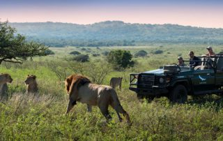 lion-safari-game-drive-phinda-south-africa - Xscape4u