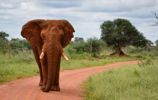 Madikwe-Safari-Dithaba-Xscape4u-Wildlife-Elephant