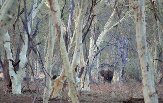 Pafuri-luxury-tented-camp-Xscape4u-Elephant-Kruger-National-Park