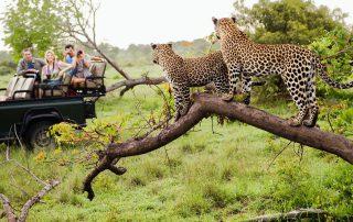 andBeyond-Ngala-Tented-leopard-safari-Xscape4u