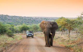Leopard-Mountain-Xscape4u-Elephant-with-Game-Drive-Manyoni