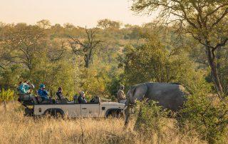 Chitwa-Xscape4u-safari-game-drive-Sabi-Sand-Game-Reserve