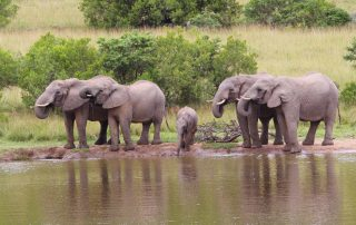 Marks-Camp-Xscape4u-elephant-Lalibela-Game-Reserve