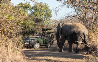 Mabula-Game-lodge-Xscape4u-Wildlife-elephant-game-drive-safari