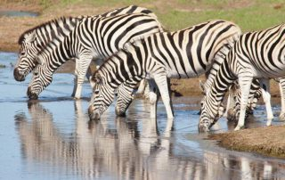 Mills-Manor-Xscape4u-Zebra-Lalibela-Game-Reserve