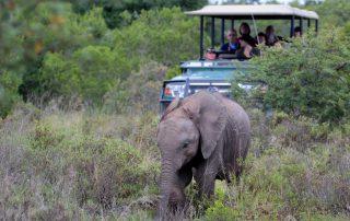 Hlosi-Game-Lodge-Xscape4u-Game-Drive-Elephant-Amakhala-Game-Reserve