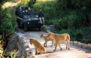 Lion-Sands-xscape4u-Safari-Drive