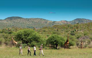 Madikwe-Safari-Lelapa-Xscape4u-Bush-walk